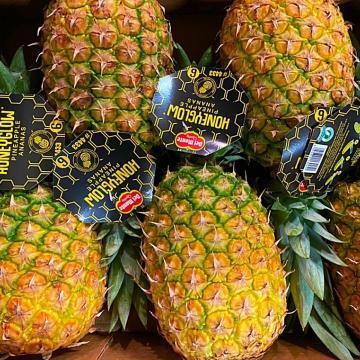 ananas maturato in pianta