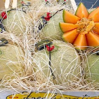 meloni zerbinati mantova
