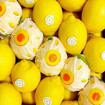 limoni italiani siciliani