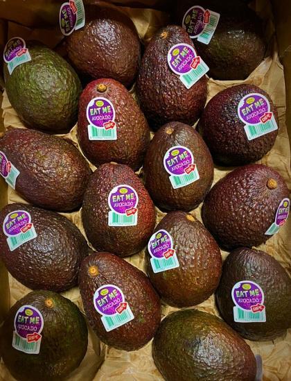 Avocado Hass frutta esotica
