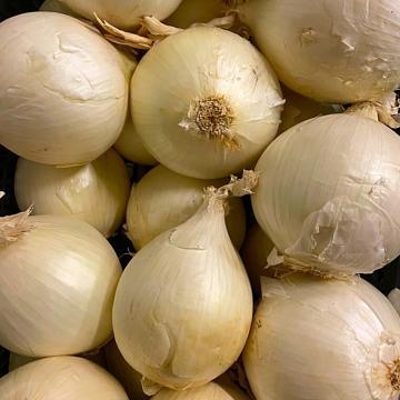 cipolle italiane bianche grosse