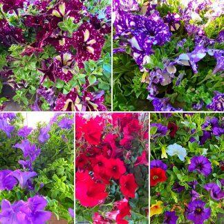 Fiori e Piante aromatiche