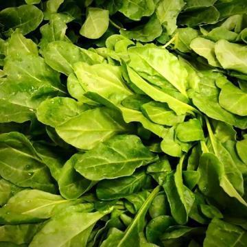 biettina verde
