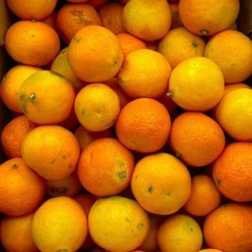 clementine biologiche italiane