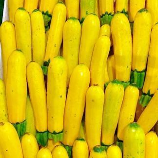Zucchine Gialle di Sant'Erasmo